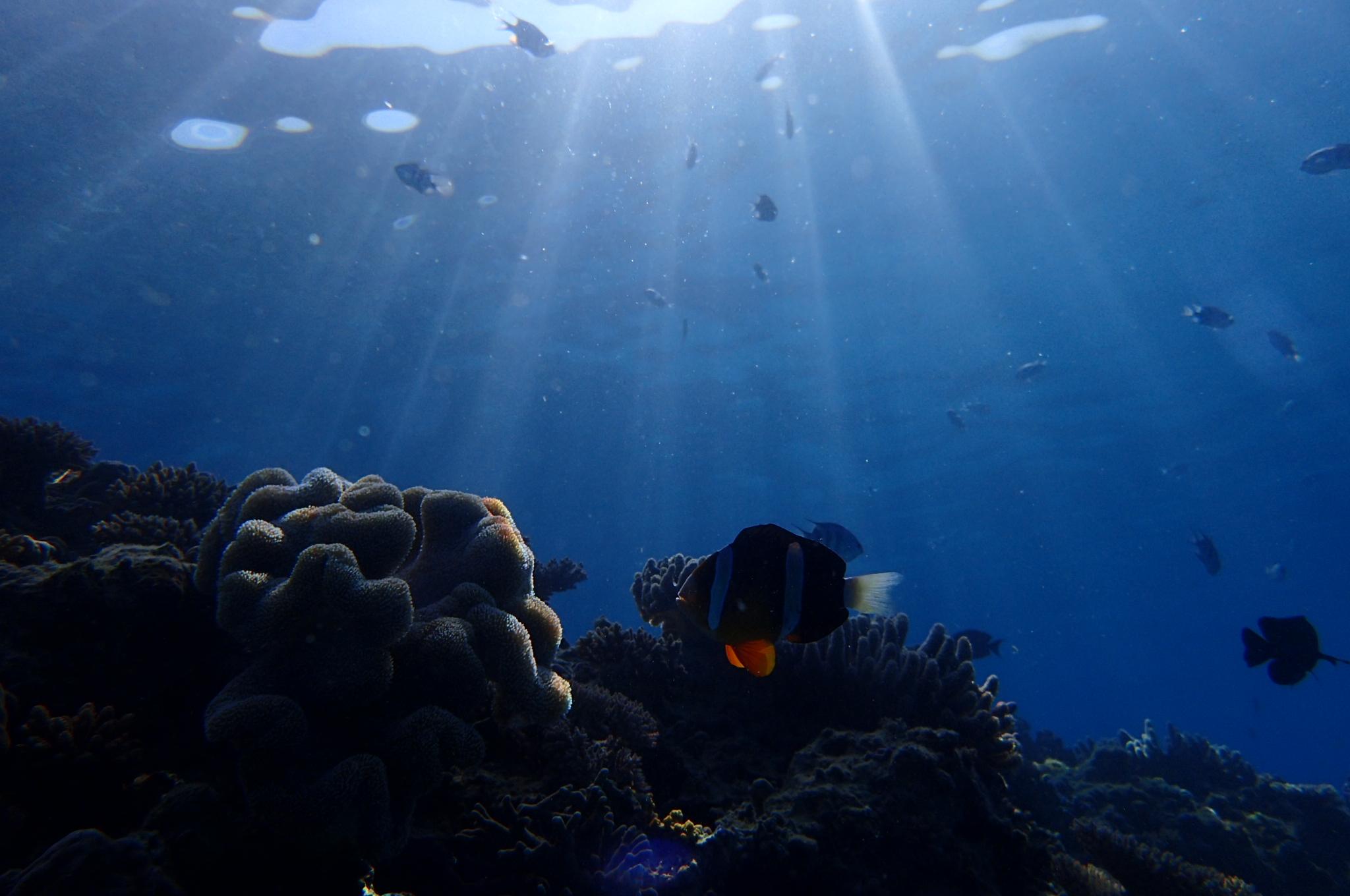 沖縄の海は年中潜れまーすよー!