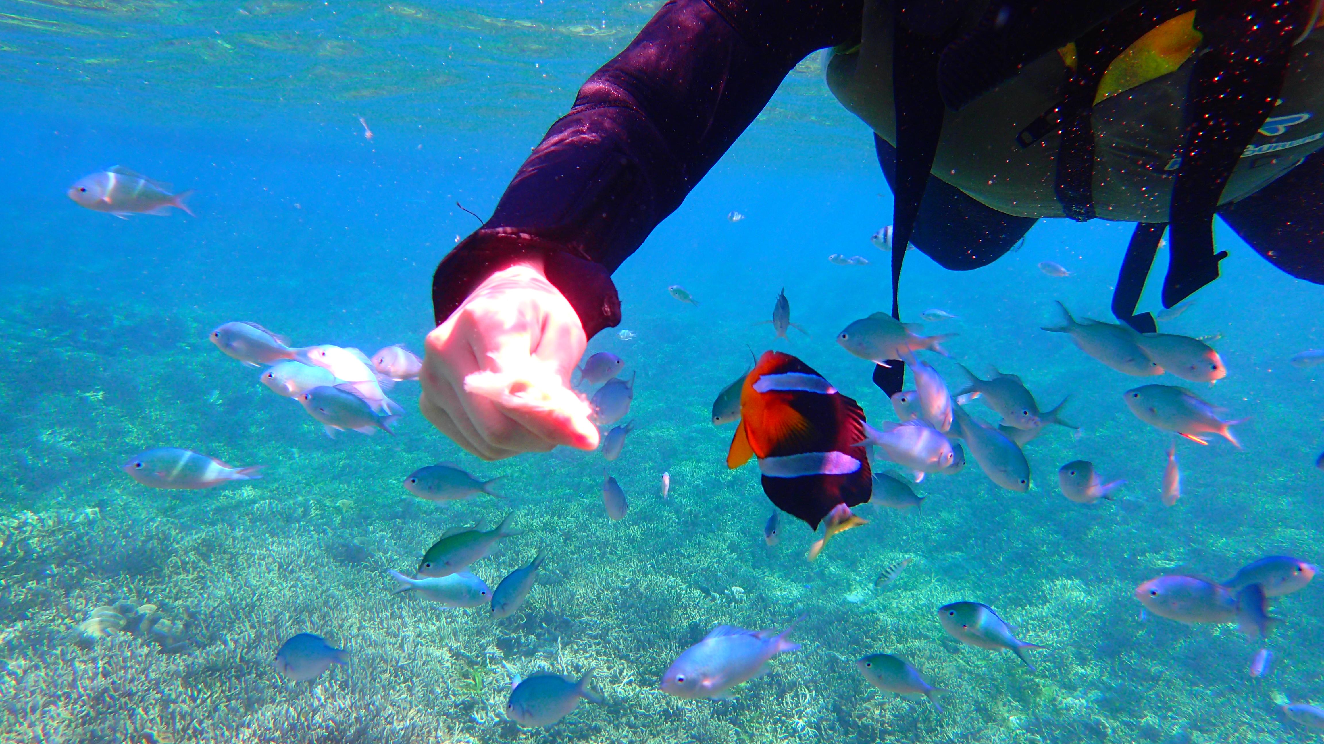 沖縄女子旅!お魚パラダイス・シュノーケル